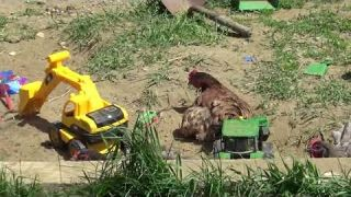 Going to a ranch for preschoolers : Part One Chickens