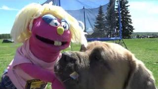 Kissed by a Farm Dog: Paige the Preschool Puppet